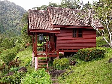 Regenwald Hütte